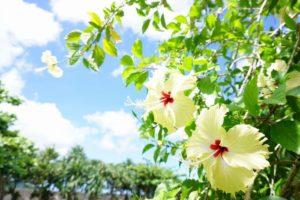石垣島はいよいよシーズンイン!シュノーケリング日和が続きます!