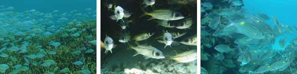 熱帯魚もいっぱいです。