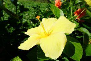 2015年10月の石垣島の天気、気温、服装、旅行、観光、アクティビティのプチブログ