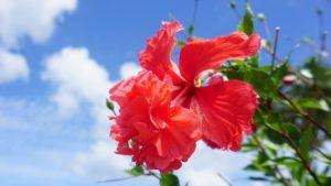 2012年12月の石垣島の天気、気温、服装、旅行、観光、アクティビティのプチブログ