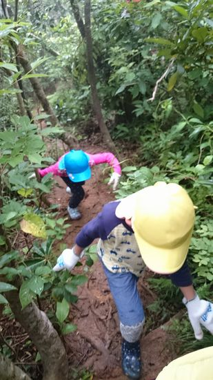 意外と険しい山道を登っていきます!