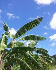 ヤシの木も暑さでへばってそう。