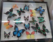 バンナ公園の昆虫館