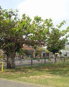 くわでーさーの木
