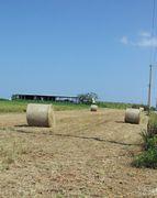 牧草ロールを作ってます。