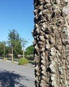 とげとげのついた幹。何の木でしょうか?