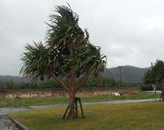 風が強い石垣島です。