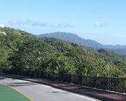山が緑緑♪季節は冬なんですけどね