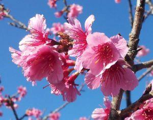 2019年1月の石垣島の天気、気温、服装、旅行、観光、アクティビティのプチブログ