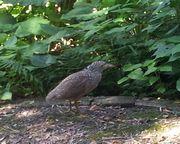 道端から鳥さん。飛び出してきます。ご注意を。