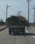トラックの荷台にいっぱいの草