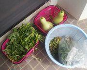 伊野田に引越ししてからいろいろな野菜を頂戴します。