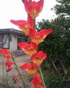 変わったかたちの花