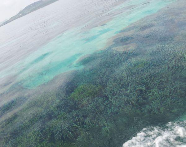 のっぺりした水面にサンゴが見えます。