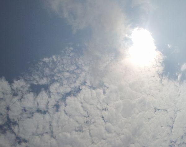 午後からあは晴れた!久々の太陽です。