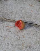 食べかけのトマトが玄関前に