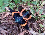 蝶々が交接中
