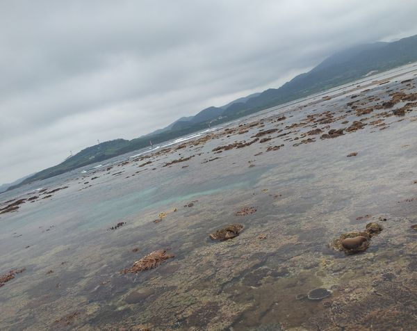 干潮時間帯は浅い場所が干上がって陸になっちゃいます。