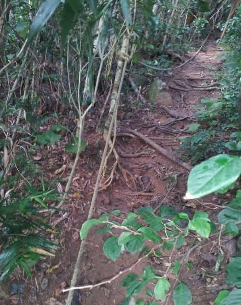 傾斜のある登山道ですが、危ないところはロープが付いています。