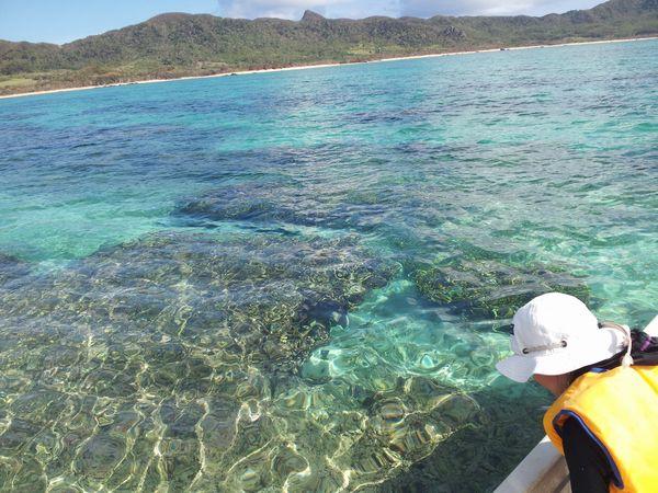 穏やかな水面なので、ボートからでもサンゴが丸見えです。