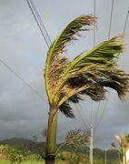 風は強めです。ヤシの木がつらそうです