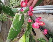 サボテンに造花が刺さってます。