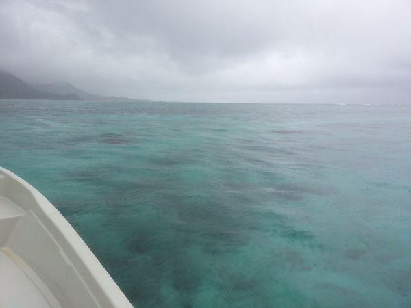 晴れてはいませんでしたが、波はおだやかです