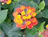 かわいいお花です