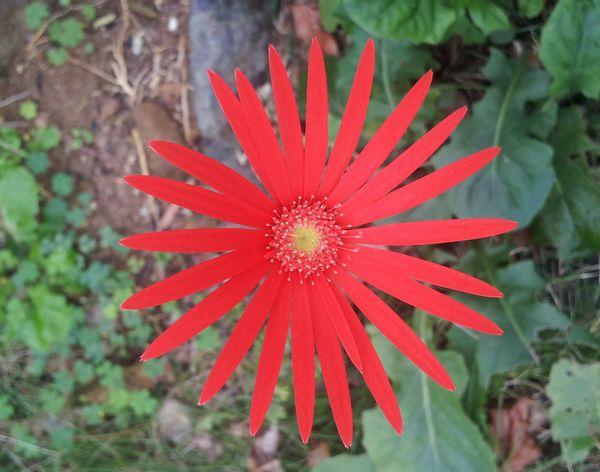 鮮やか過ぎる一輪の花