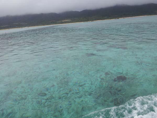 あいにくの天気ですが、海は穏やかです。水面まで見えちゃいます