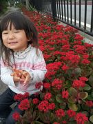 街路樹には花がいっぱい