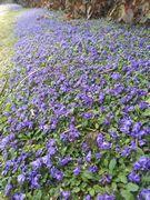 幸おばさんちの垣根にはキレイな花がびっちり