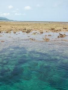 さんご礁の海から、シュノーケルツアーは干潮時間をおすすめの理由