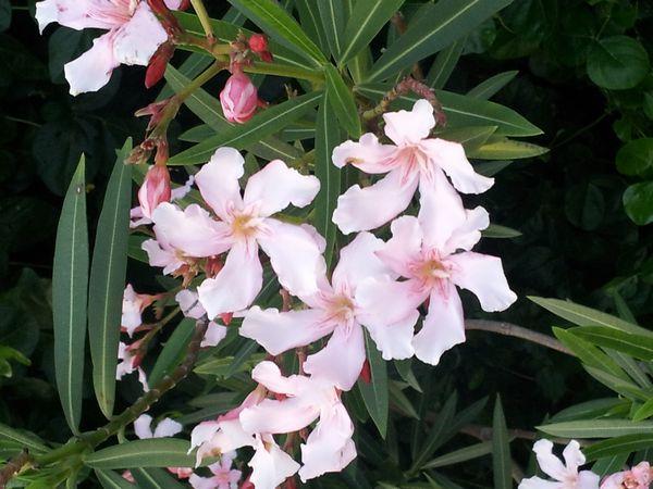 キレイな花にはとげがある!