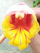 ゲットウの花をドアップで。