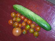 きゅうりにトマトです