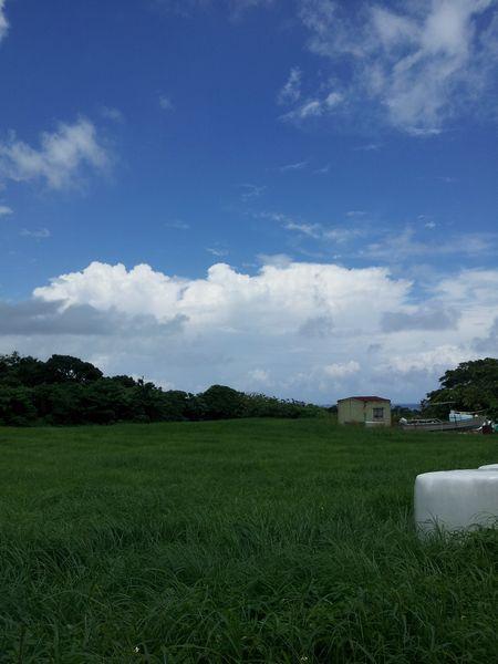 夏雲が登場!もうすぐ梅雨明けですね!