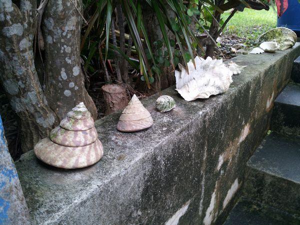 事務所前の階段に貝がら