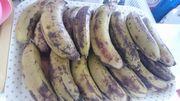 今日はバナナを頂きました