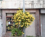 今、石垣島は花で満ち溢れています