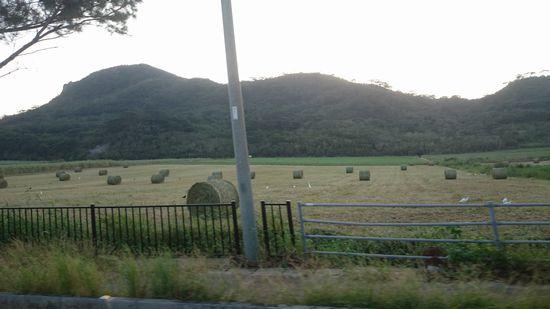 牧草ロールがいっぱい