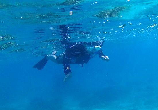 お父さんもマイペースに泳ぎ回っています。