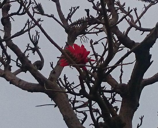 ディゴ咲き始めました。