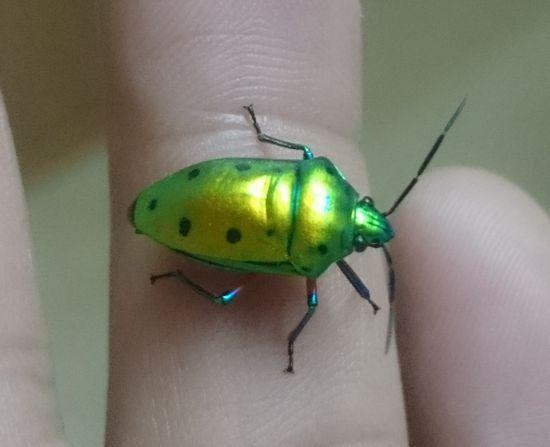 ちょっと奇抜な色の虫