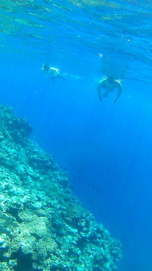 深場の断崖絶壁です