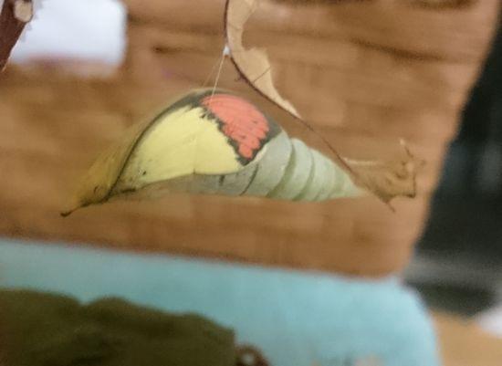 羽の模様もくっきりです。