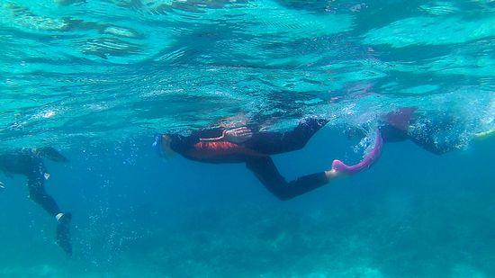 余裕の泳ぎで楽しんでいます。