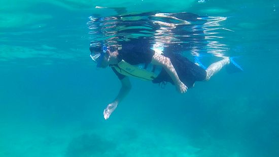 お父さん、マイペースに泳いでいます。