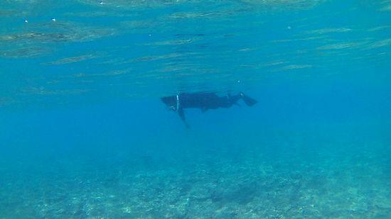 お父さんはすぐに顔をつけて泳いでいます。
