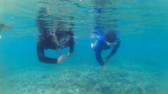 エントリーとともに水中世界に没頭です